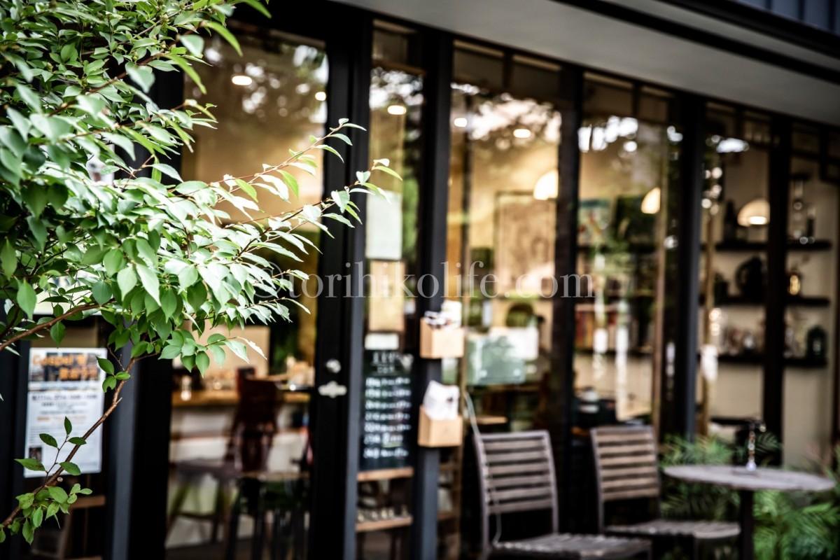 カフェ安南の入り口にある木