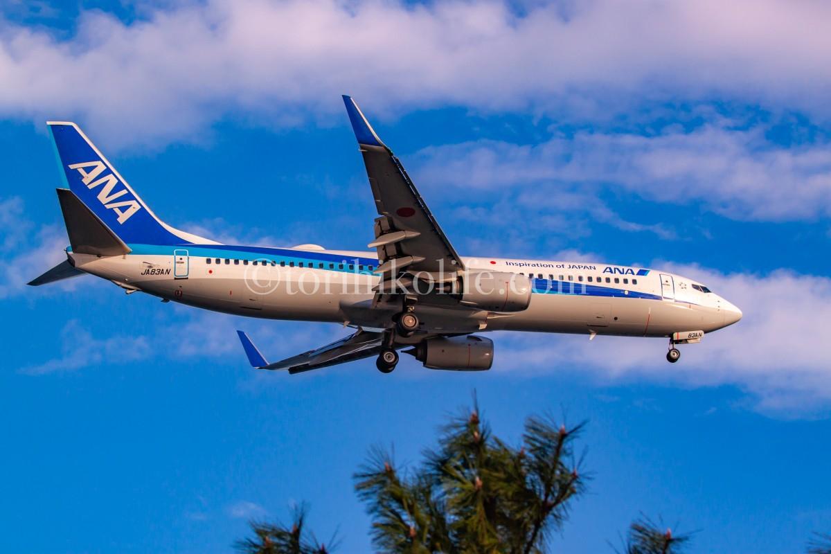 青空の中B滑走路22に着陸するANA機