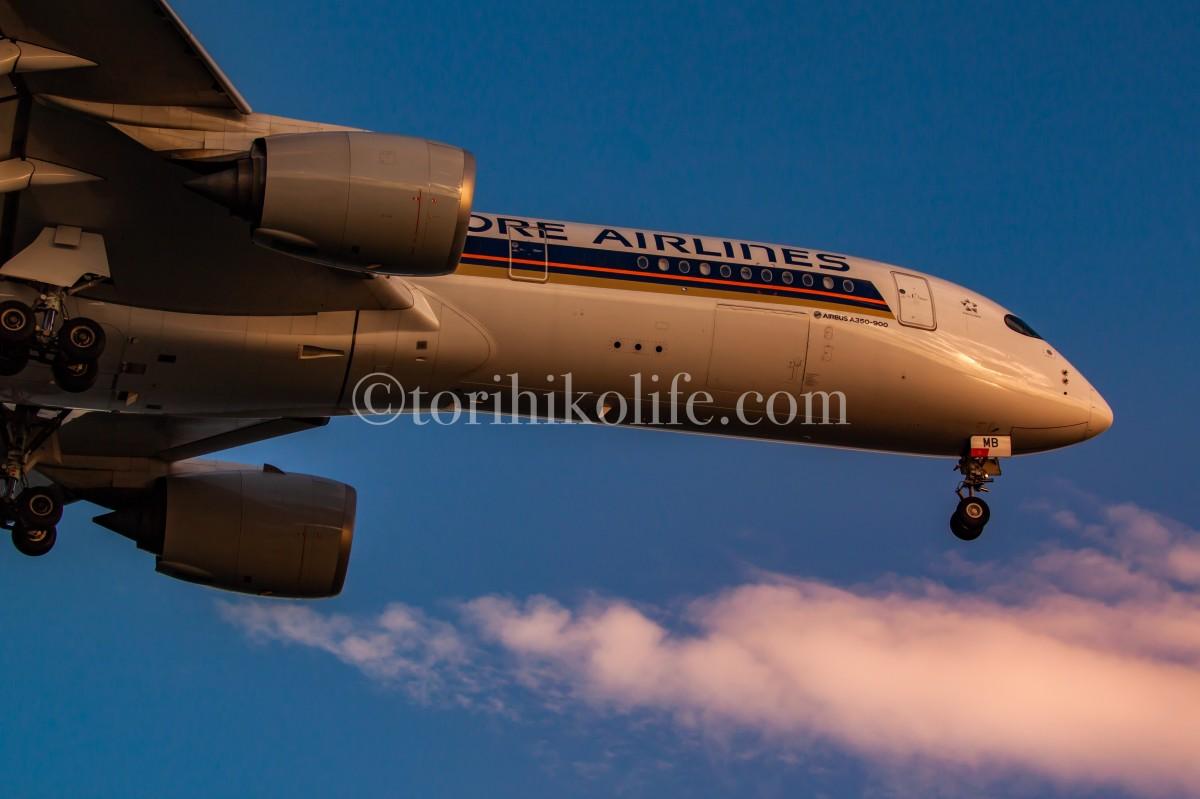 夕陽を浴びるシンガポール機の横顔