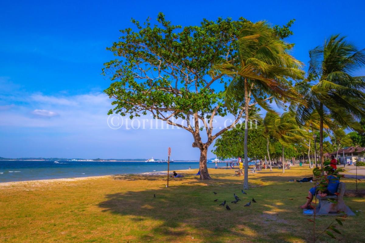 チャンギビーチとヤシの木